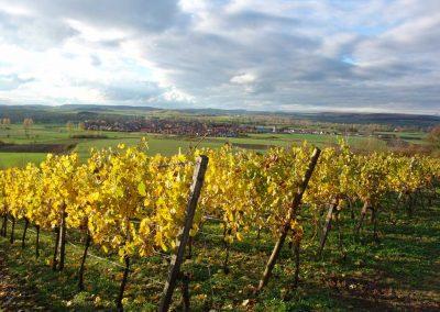 Blick in einen fränkischen Weinberg