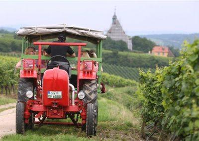 Mit dem Oldtimer unterwegs in den Weinbergen